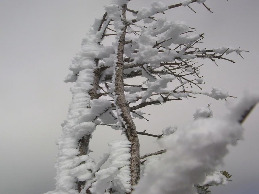 冬季三ツ頭